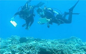 photo of students scuba diving near coral reef
